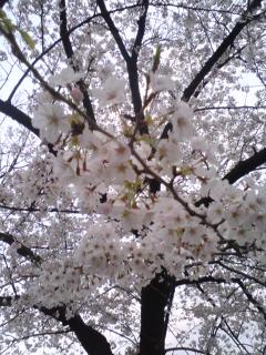 桜チョメ吉のブログなだけに
